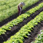 農家の経費計上や農業法人(農地所有適格法人)で節税を行うには