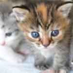 犬や猫のペット購入費や餌代、病院代を経費計上して節税する